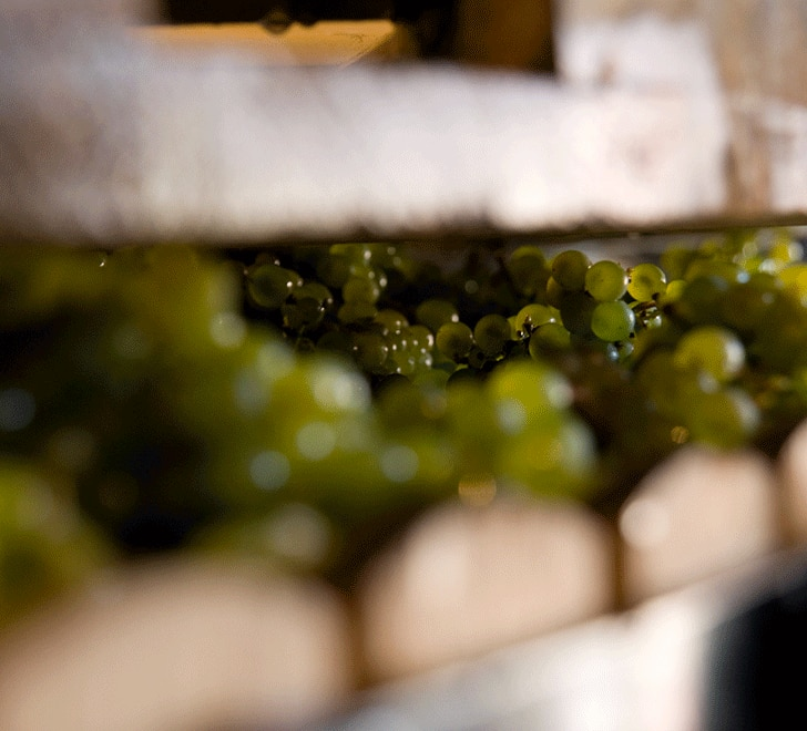KRUG The First grapes Presseurs